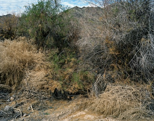Sonora, Serie: On arid and desolate regions..., Archival Ink Print, 79 x 100 cm, edition 5+1