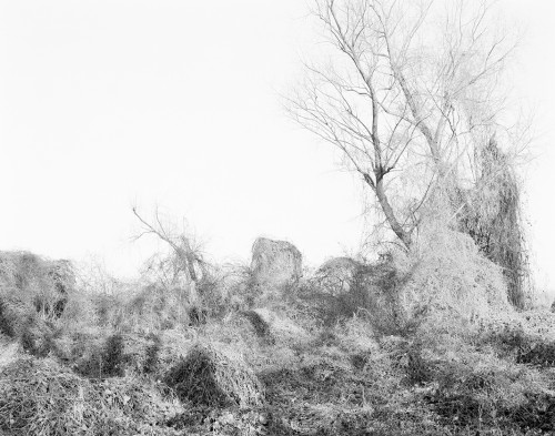 Vlies, Tales of Attack and Defence, Archival Ink Print, 79 x 100 cm, edition 5+1